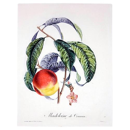Madeleine de Courson