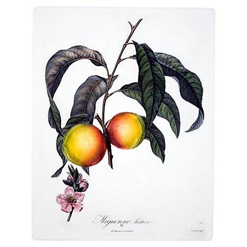 Mignonne Native Peaches with Bloom