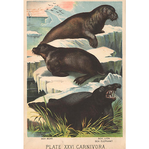 Sea Bear, Sea Lion & Sea Elephant