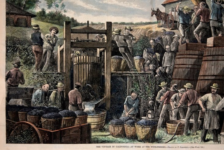 The Wine Making Process/ 19c California
