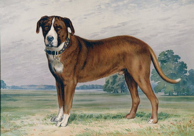 Hunting Dog by Alexander Pope, Jr