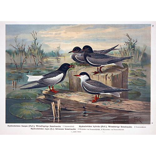 Four Sea Swallows at the Seashore