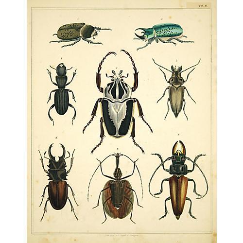 Eight Beetles in Detail