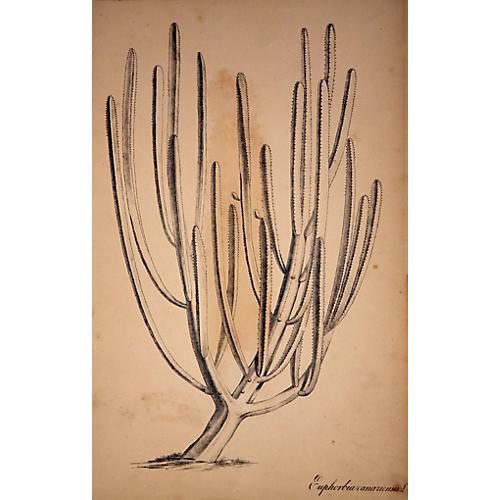 Exotic Cactus
