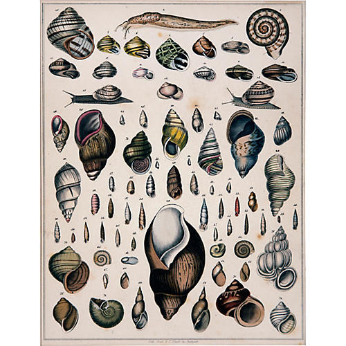 A Diversity of Snail Shells by Shach