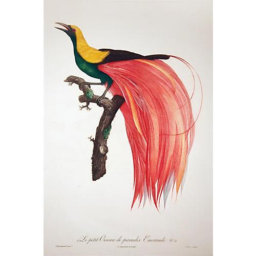 Oiseau de Paradis #4