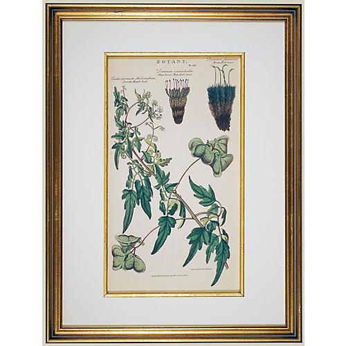 Framed 1812 Seed Plants