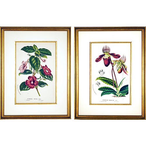 Framed Florals w/ Gold Fillets, S/2