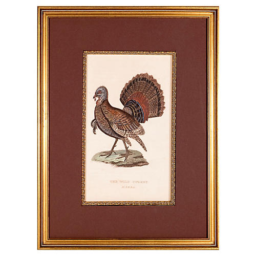 The American Wild Turkey, 1829