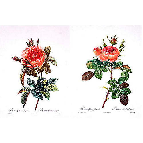 Legendary Roses by Pierre Redouté, S/2