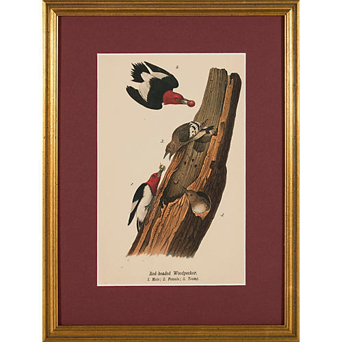 Framed Red-Headed Woodpeckers