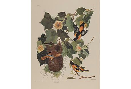 Baltimore Oriole by Audubon