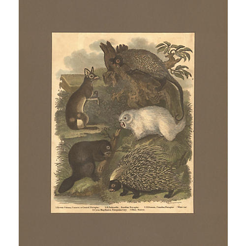 Antique Animals Print