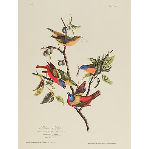 Buntings by J. Audubon