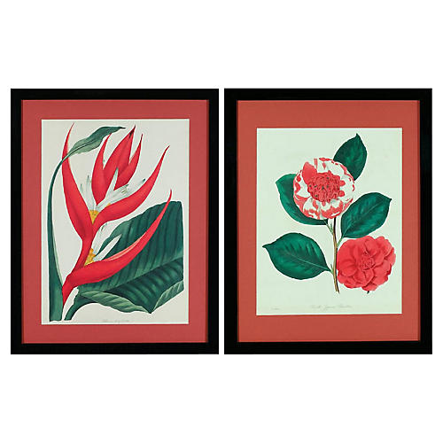Framed Paxton's Florals, S/2