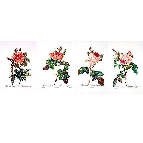 Redouté Roses, S/4