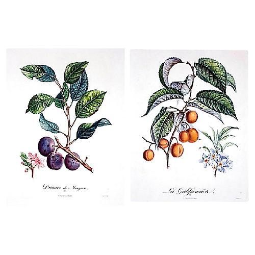 Fruit Etchings, S/2