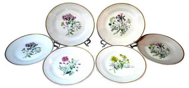 Ginori Italy Botanical Lunch Plates, S/6