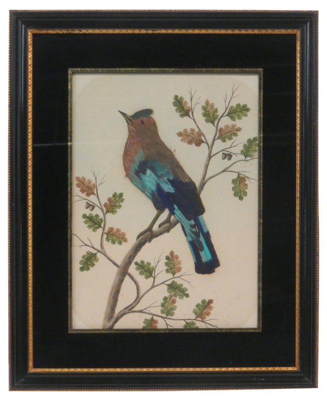 Feathered Bird Study