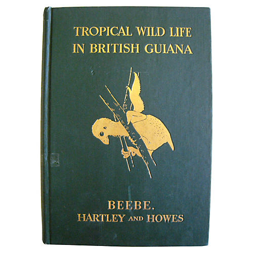 Tropical Wild Life in British Guiana